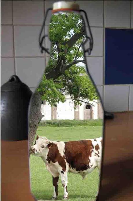 lait-vache agriculture ps76 76