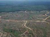 Forêts Sarawak dénonce