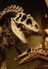 dinosaures squelette
