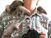 Rats: descendance d'Aramis