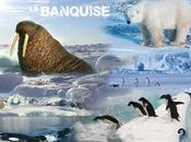Création Nicolas Banquise faune