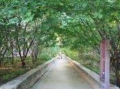 Jardin attenant musée Cluny