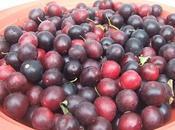 Confiture prunes sauvages 3ème dernière édition