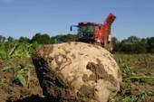 Contamination de terreau pour jardinier par de la betterave OGM