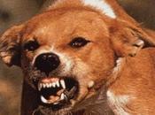 Attention, chiens enragés