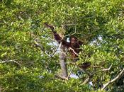 faune Sungai Kinabatangan
