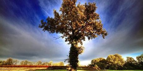 arbre