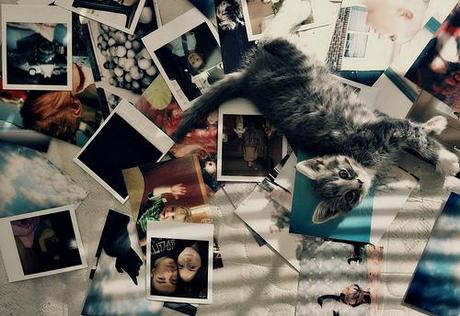 Polaroid et compagnie