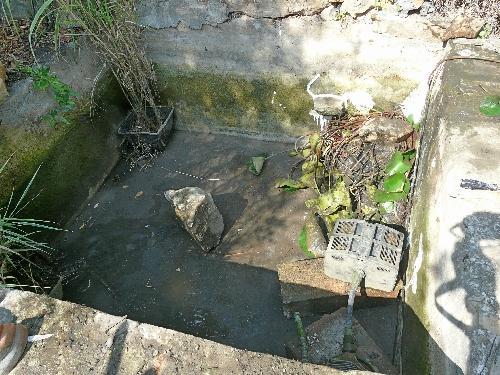 Bassin de Jardin : entretien et nettoyage d\'automne !... | À Voir