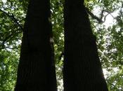 arbres m'interpellent (Charles Dobzynski)