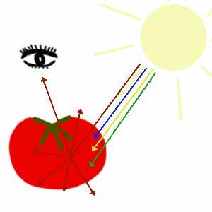 http://science-ouverte.u-strasbg.fr/site/site/site/exclusif/exclus_juniors/exclu_03_2003/images/tomate.jpg