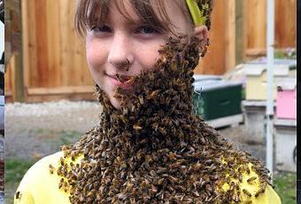 les abeilles une esp ce en voie de disparition paperblog. Black Bedroom Furniture Sets. Home Design Ideas