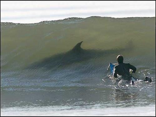 surf-requin.jpg