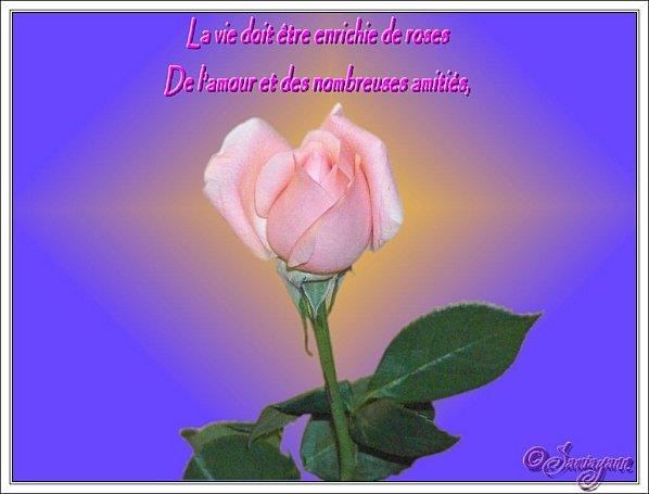 http://a6.idata.over-blog.com/600x455/2/27/06/12/Cr-ations-et-photos-animations/Mes-creations-personnelles/citation-rose-par-samia-nasr.jpg