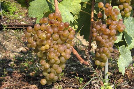 Le raisin, ses bienfaits et nouveau blog de Leila77