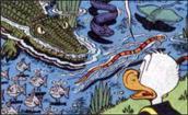 crocodile mordu canards