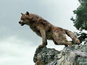 Comment Wolf Packa créé Photos exclusives!