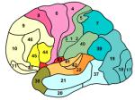 2009 cerveau bègue différent