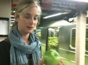 City Harvest: Apples against Waste