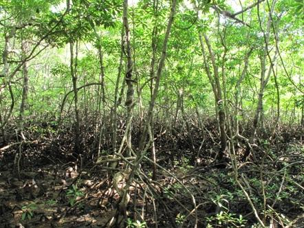 Philippines – Nature, Mangrove, Rain forest.