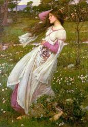 Windflowers-1903.jpg