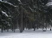 Tête d'Or sous neige