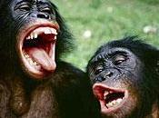 Save Bonobo