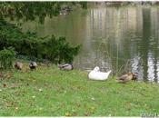 Parc Oberthur Rennes (4/4)