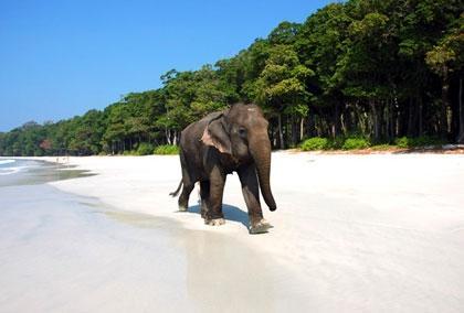 420-Andaman-Islands-Elephan-420x0.jpg