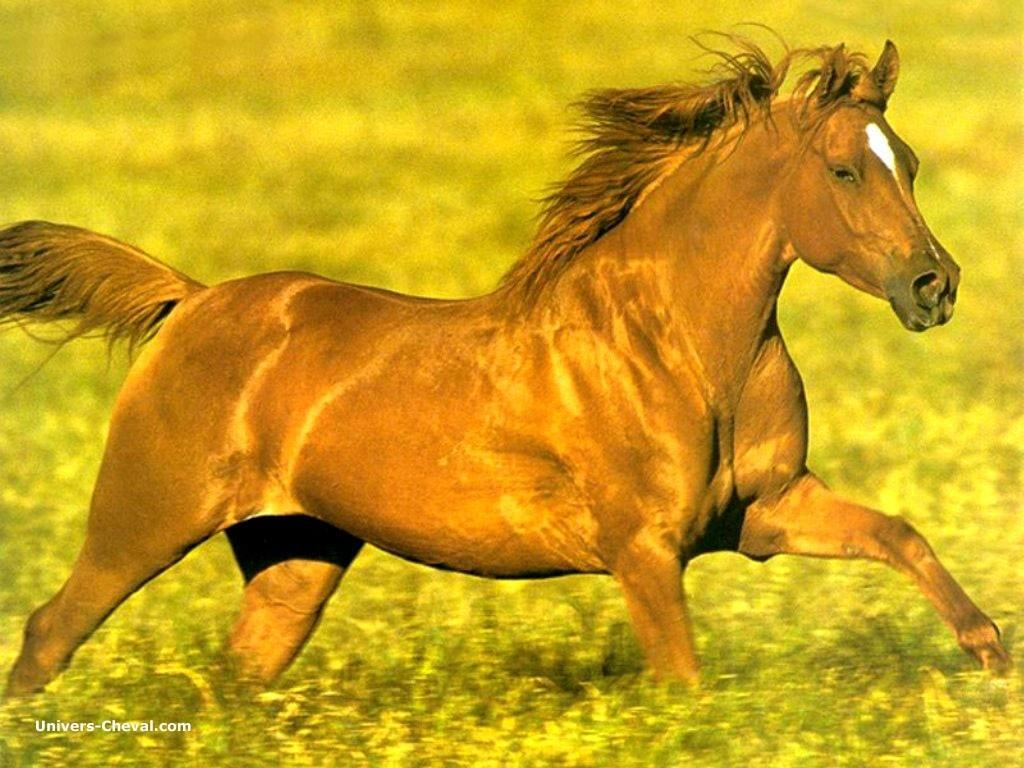 http://www.univers-cheval.com/images/cheval/wallpapers/real_9164-cheval-au-galop-prairie.jpg