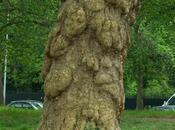 arbres cacheront plus forêt