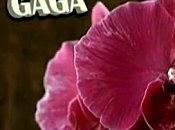 Lady Gaga /Alexander Skarsgard