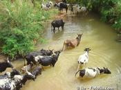 Investir dans élevage plus durable
