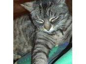 C'est père Guillaume perdu chat