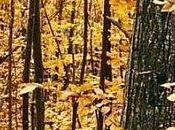 Chalet automne
