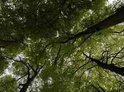 tragique forêt Lappersfort