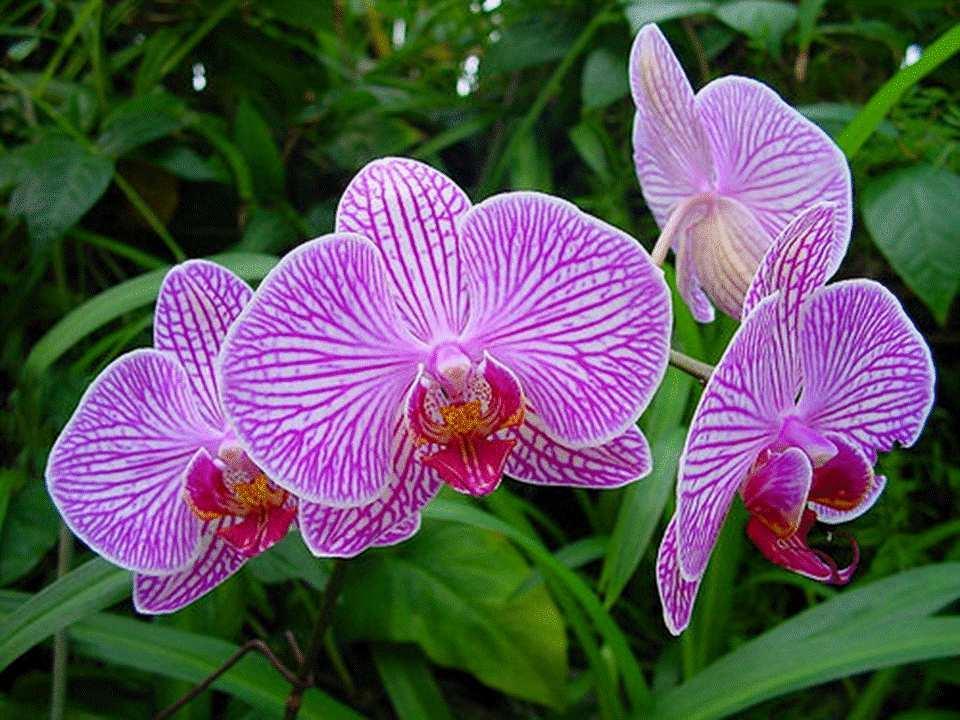 belles orchidées - À lire