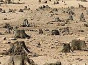 Deforestation rechauffement climatique