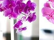 mariage thème l'orchidée Oui, veux