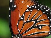 L'IMAGE JOUR: Jardin papillons, Hunawihr