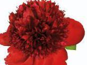Beauté fleurs plantes décoratives, Jean-Marie Pelt, éditions chêne