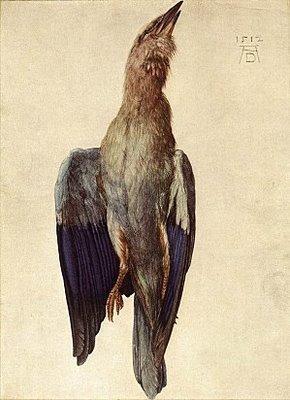albrecht-durer-oiseau-mort.1271005565.jpg