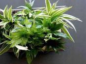Small Garden, tableau végétal accroché