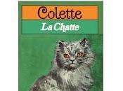 Chatte Colette