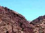 Bolivie L'arbre recrache forêt