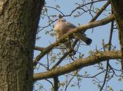 Pâle matin Février couleur tourterelle (Paul-Jean Toulet)