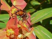 mouche parasite nombreuses chenilles…
