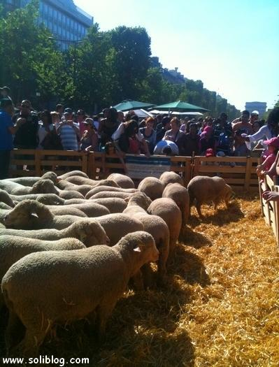 Nature Capitale Moutons Capitaux - Tous droits réservés -  Soliblog