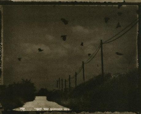 """""""Les corbeaux sont les oiseaux qui me manqueront le plus..."""
