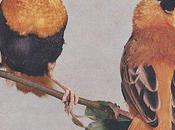 Juin chez oiseaux cage volière